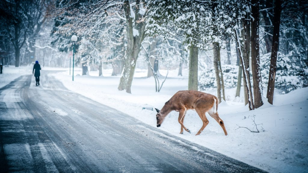 Watch Out for Deer